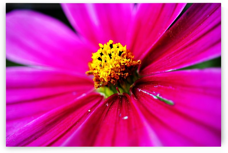 Abstract Pop Color Flower Photography 37 by Richard Vloemans Macro Photography