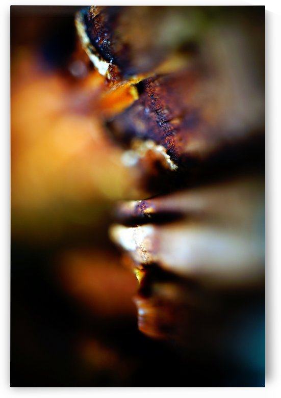 Abstract Macro Nature Photography 156 by Richard Vloemans Macro Photography