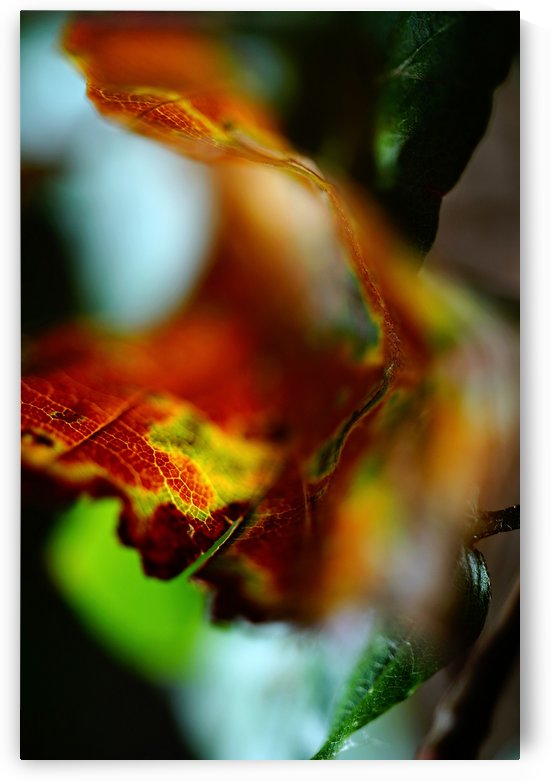 Abstract Curled Leaf 03 by Richard Vloemans Macro Photography