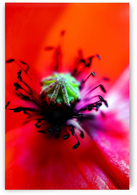 Abstract Pop Color Flower Photography 43 by Richard Vloemans Macro Photography