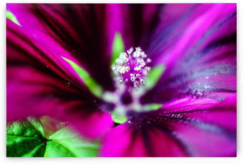 Abstract Pop Color Flower Photography 44 by Richard Vloemans Macro Photography