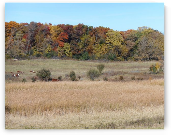 Cow Pasture in Fall by Castle Green Enterprises