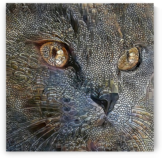 Smokey Blue Cat Portrait by HH Photography of Florida