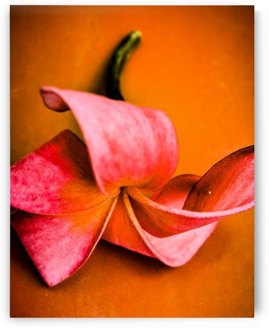 Flower vibrant by Kishore Dharuman