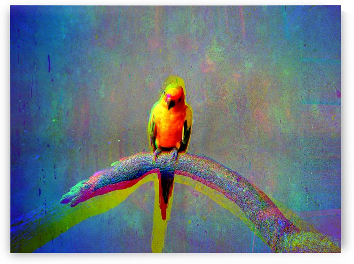 Parrot color effect by Kishore Dharuman