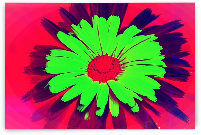 Graphic Flower Effect by Kishore Dharuman