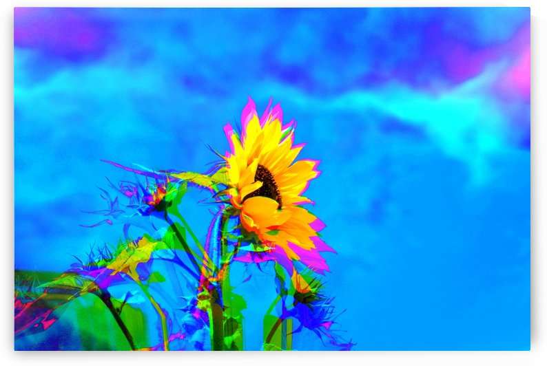 Sun Flower Graphics Mixed by Kishore Dharuman
