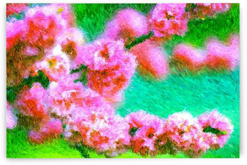 Pink Spring  by Joy Watson