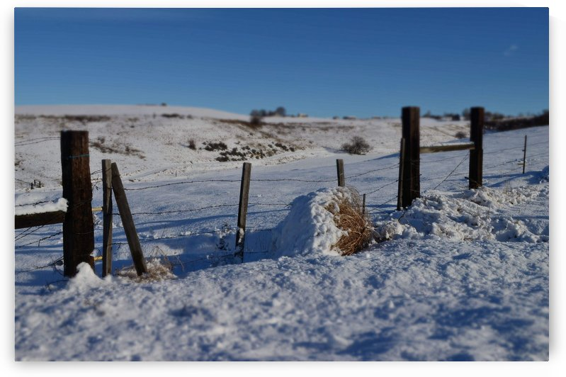 Frozen Fences by MDruba