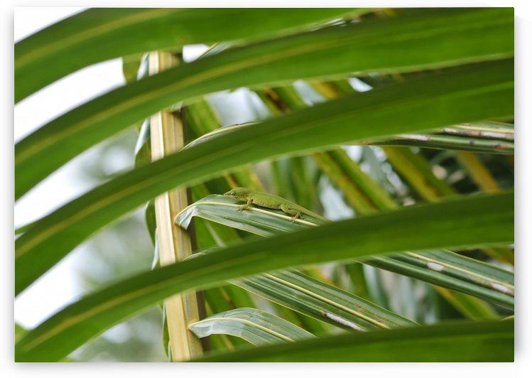 Green Anole Lizard by Ian Barr