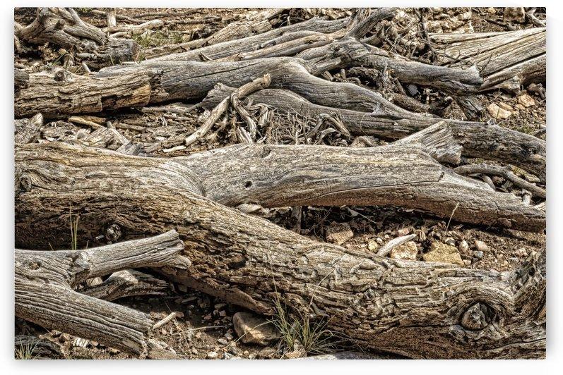 Deadwood by Ian Barr