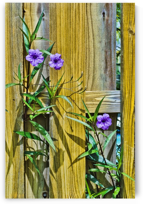 _DSC2013 Fence Flowers by Ian Barr