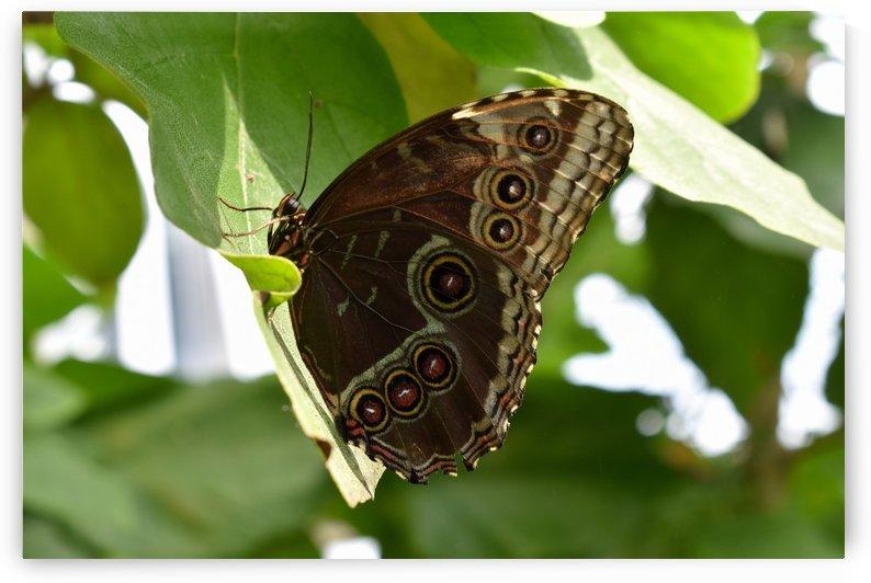 Butterfly Wings by MDruba