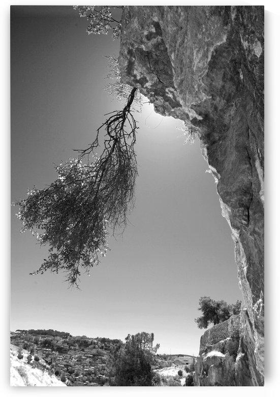 A Rock Awakening by Natasha Shakhnes