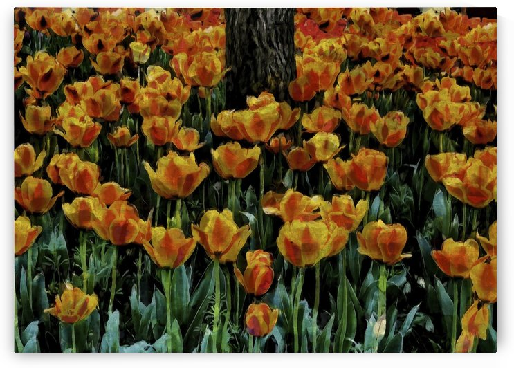Tulips in Amber by Robert Knight