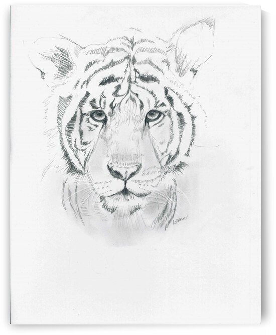 Young Tiger by Peter Horrocks