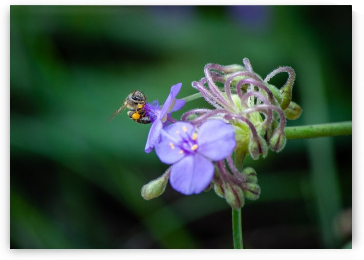 Bee and Flower by Infinity Design and Photography