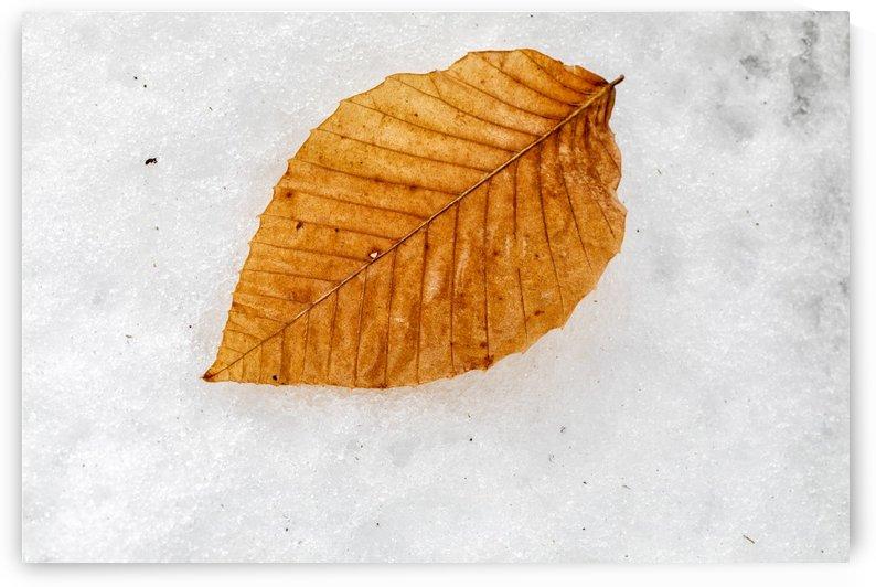 Golden leaf by Kaye