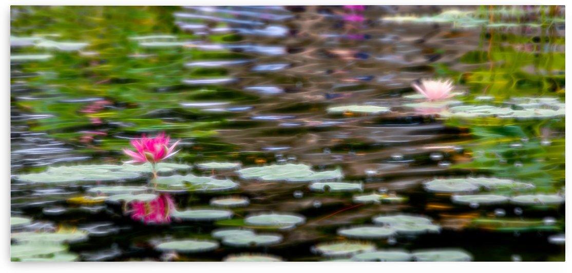 Lilies by Kaye