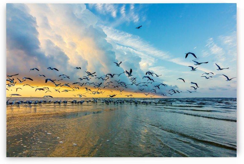 Birds at Sunrise by JMcCool