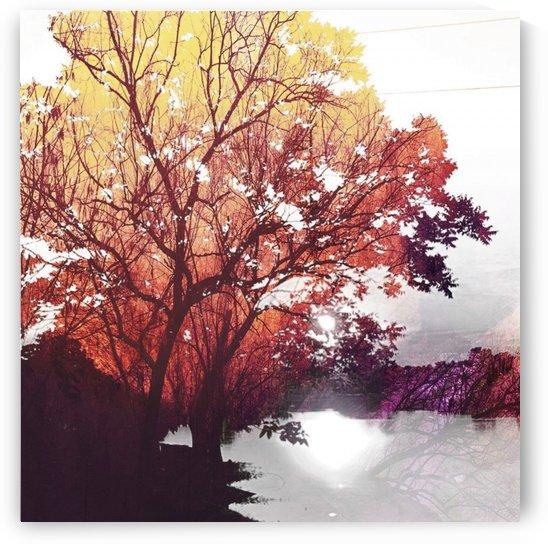 Autumn dusk by Shanta Nicole