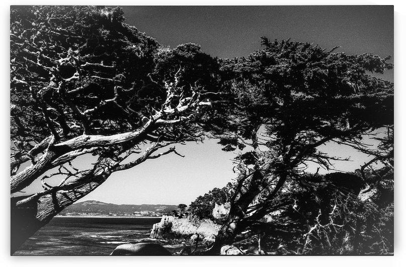 Point Lobos by Michael Bancas