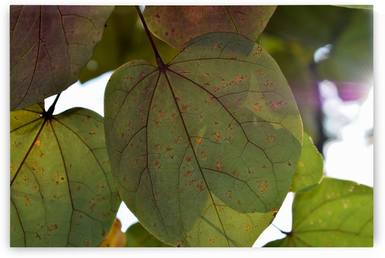 Lighted Leaves by MDruba
