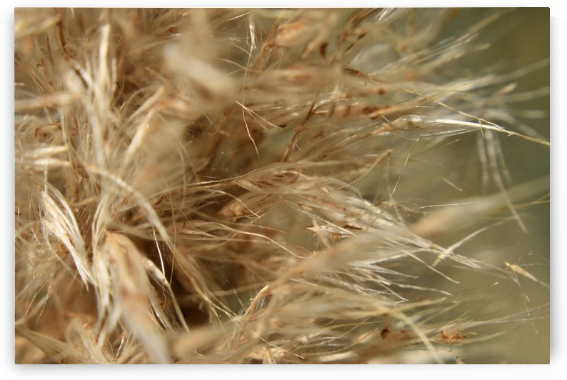 Grass Allergens and Fluff by MDruba