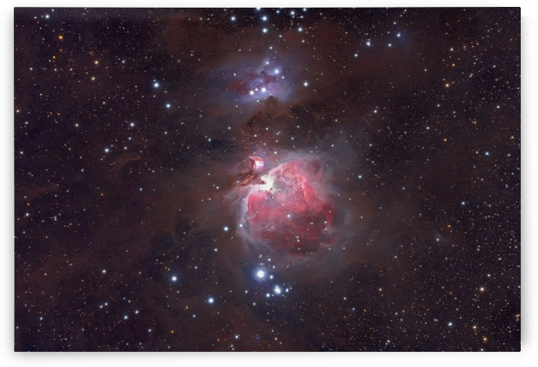 Orion Nebula by Dave Robitaille