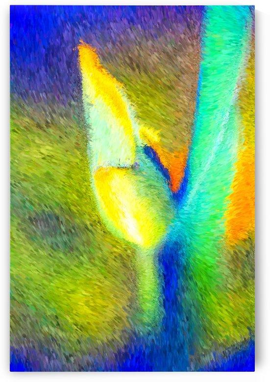 Bold Tulip Bud  by Joy Watson