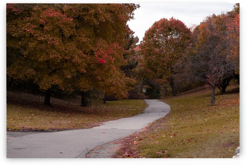 Autumn in the park by Lexi Wall Art