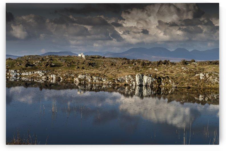 The White Horses of Tír na nÓg by Gerald Cummins