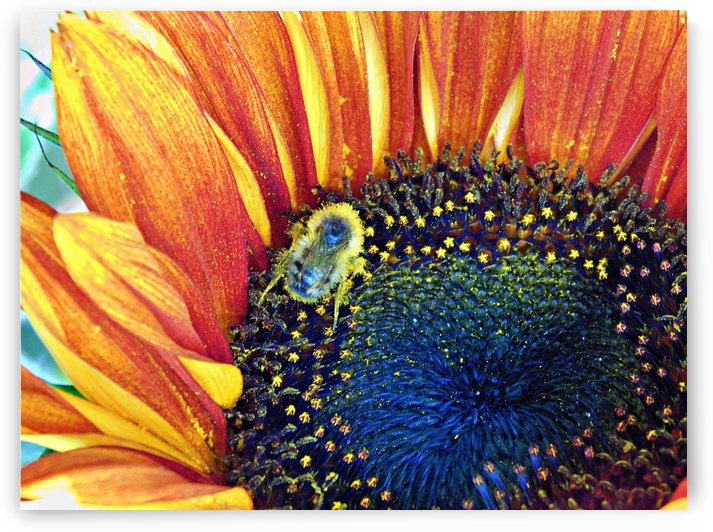 bee happy by Laura Seymour