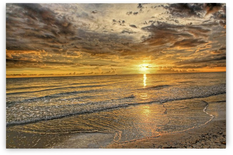 Golden Glow by HH Photography of Florida