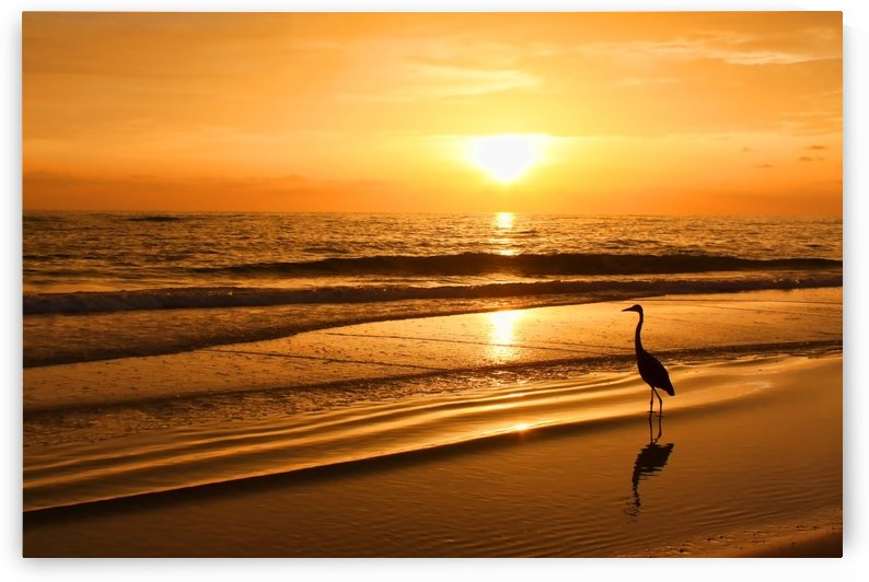 Sunset Gold by HH Photography of Florida