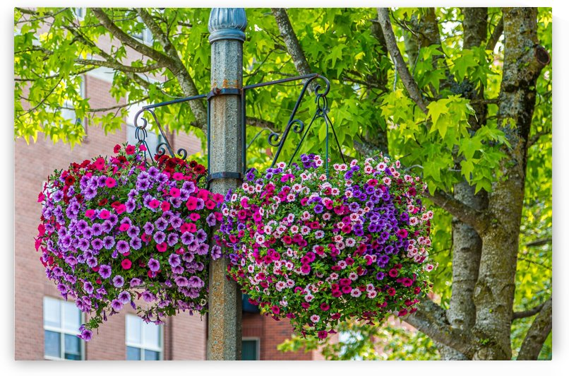 Colorful Flower Pots by Darryl Brooks
