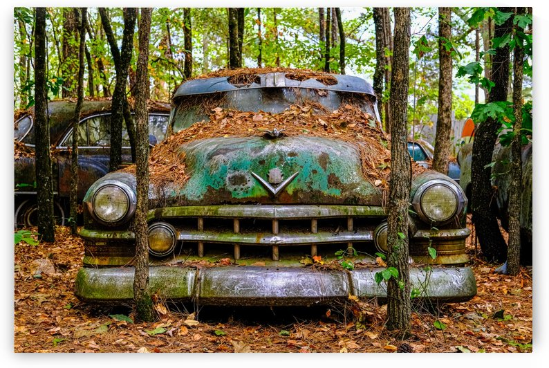 Old Caddy into Trees by Darryl Brooks