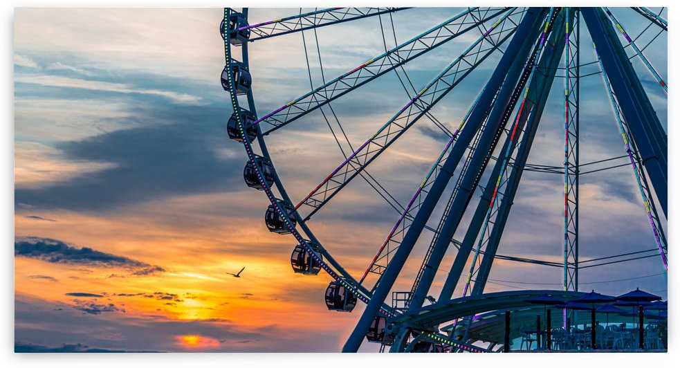 Seagull by Wheel at Sunset by Darryl Brooks
