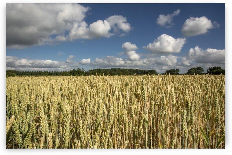 Grain I by GreyShot