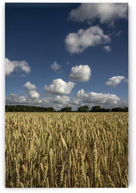 Grain II by GreyShot