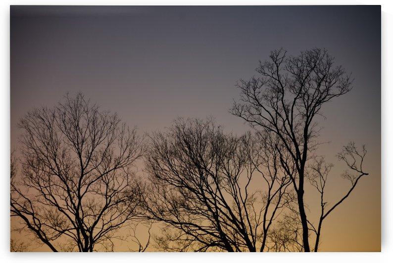 Winter Sunset Photograph by Katherine Lindsey Photography