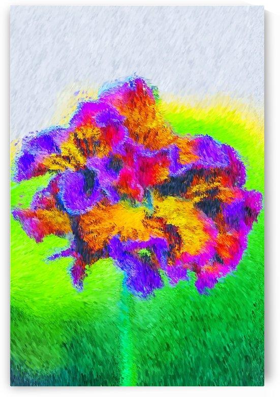 Bright Frilly Pansy by Joy Watson