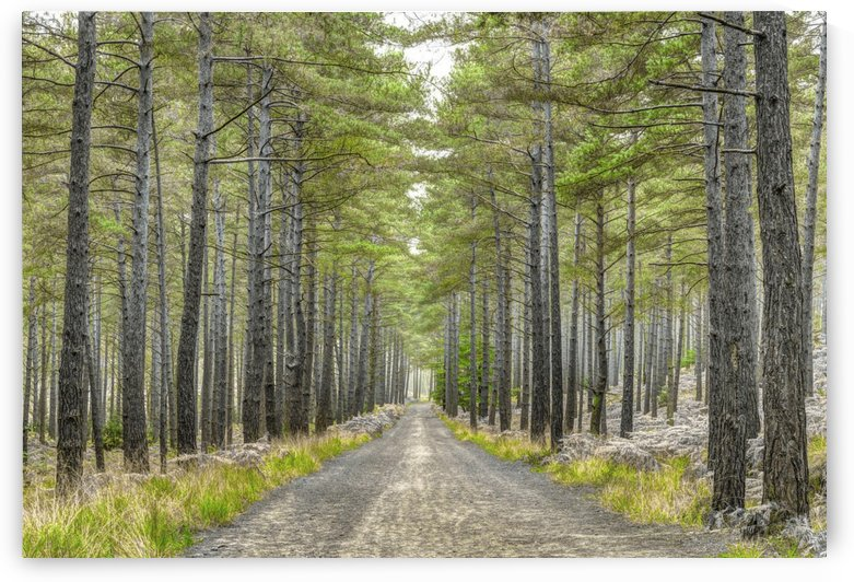 Pathway through Autumn forest by AmilenaCollection