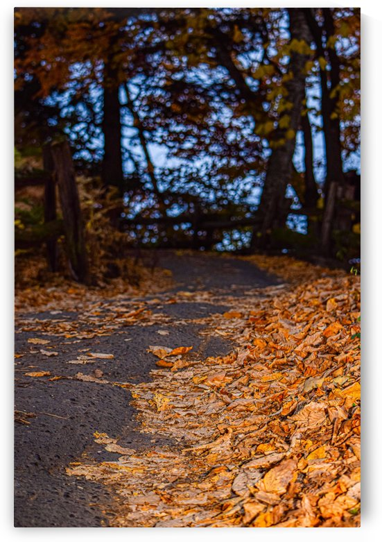 Au bout du chemin by anniephotographeartdeco