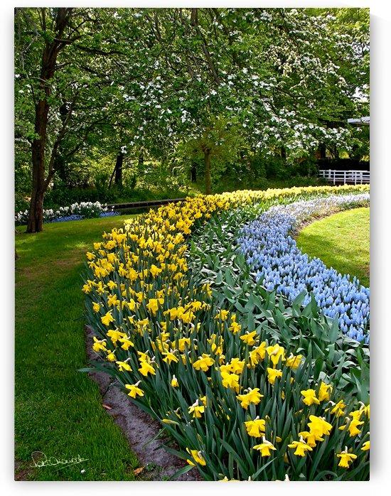 Dutch Daffodil Curve by Shadow and Form