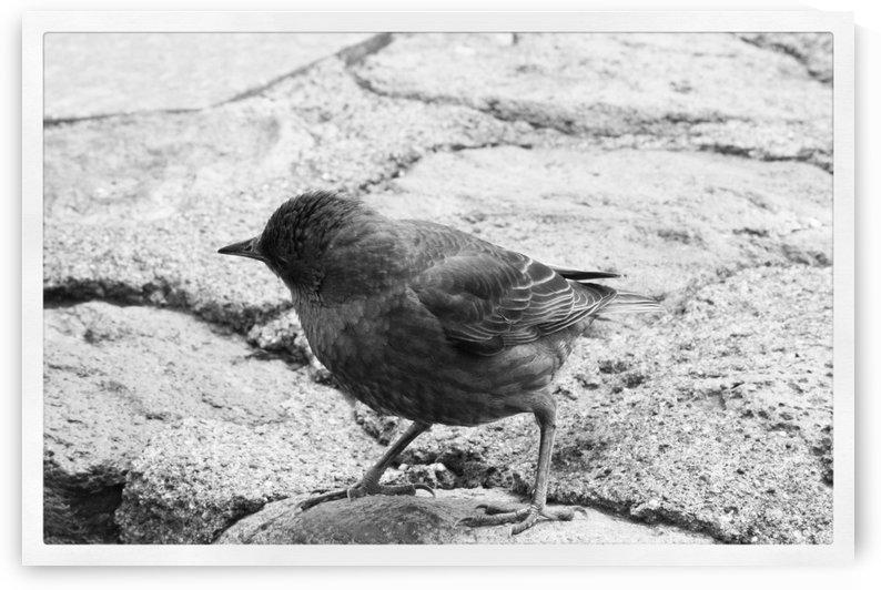 Bird on Stonehenge  by Jesus Lopez