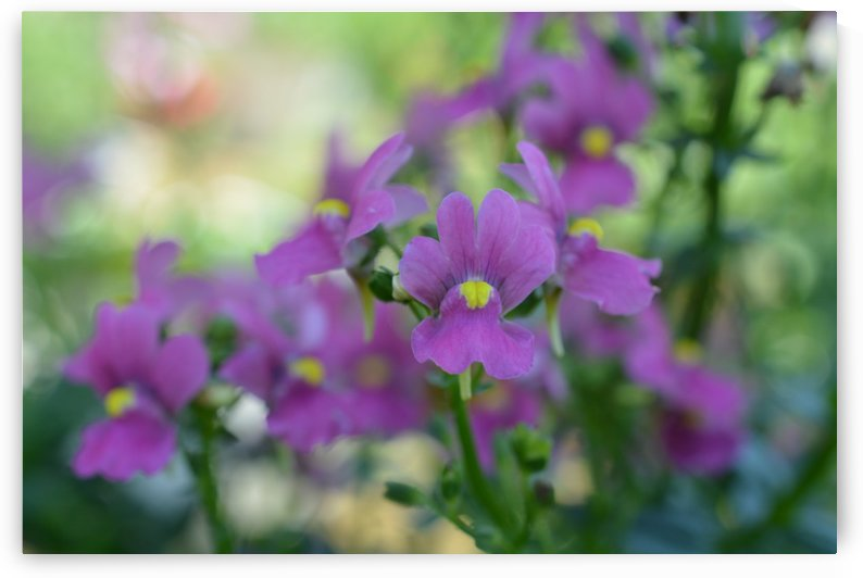 Soft Purple Flowers Photograph by Katherine Lindsey Photography