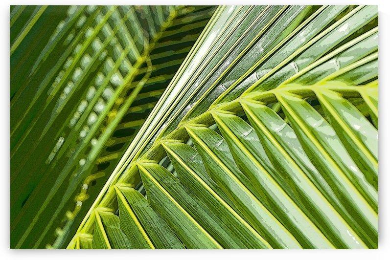 Coconut Palm 1 by Ian Barr