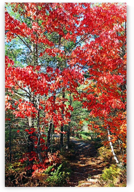 Colorful Fall Trail by Deb Oppermann