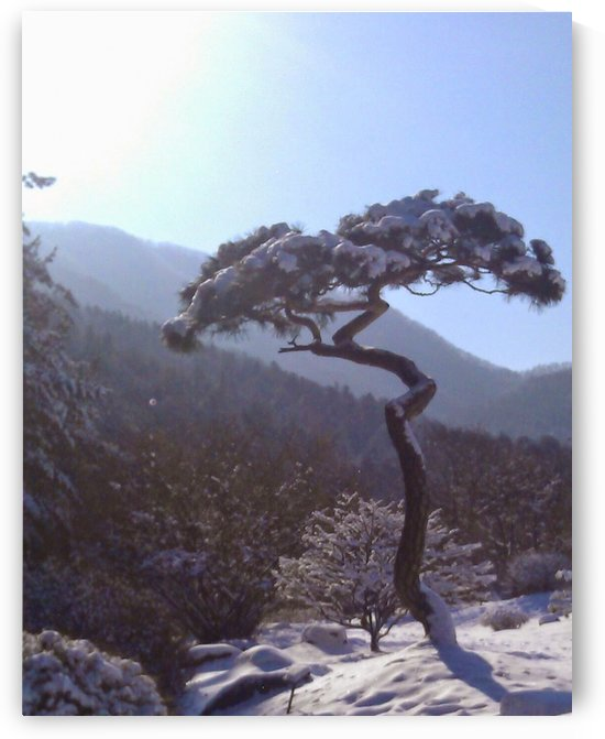 Tree in Snow by Eric  Todd Price